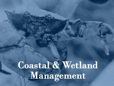 Coastal & Wetland Management