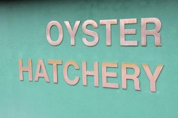 Oyster-Hatchery-Sign